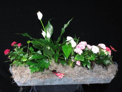 Wooden Planting Tray