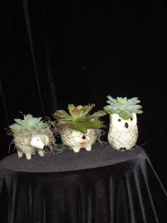 Critters Succulent Set of 3