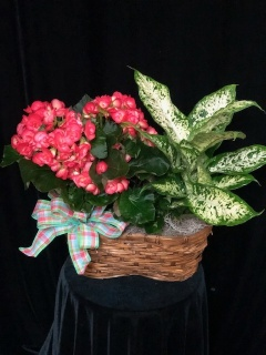 Double Blooming and Green Basket