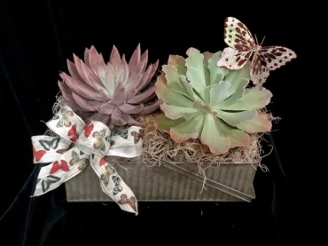 Butterflies and Succulents