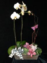 Posh Orchid Planter