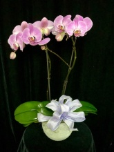 Spring Orchid Planter