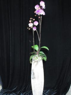 Orchid in Tall Wooden Planter