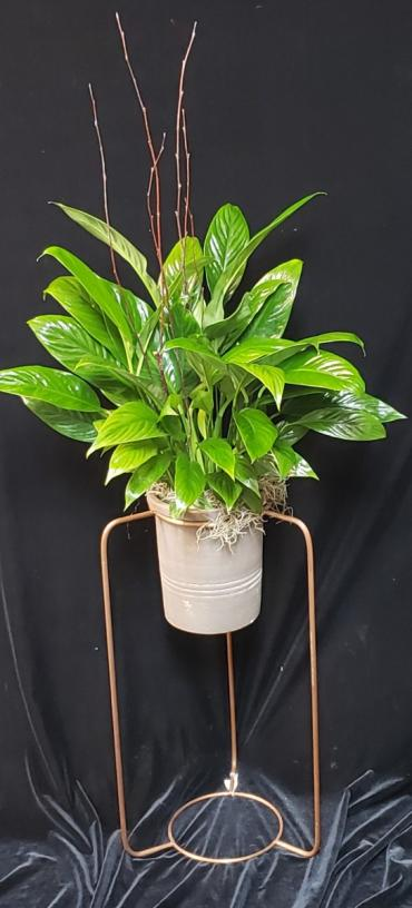 Peace Lily on Stand