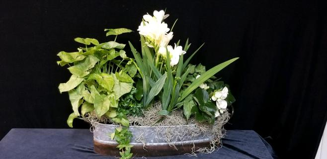 Rustic Tin Dishgarden