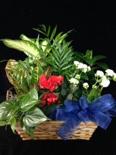 Old Glory Plant Basket