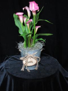 Callas in Rustic Tin