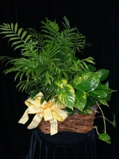 Designers Choice Double Green Plant Basket